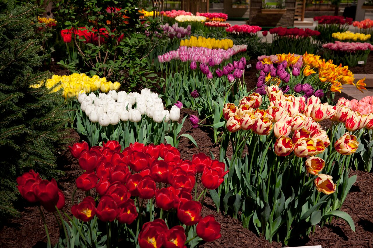 spring is in bloom at the chicago flower & garden show | concierge