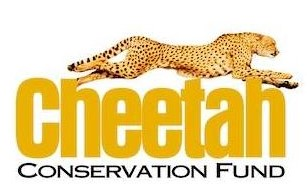 This image has an empty alt attribute; its file name is cheetah1.jpg